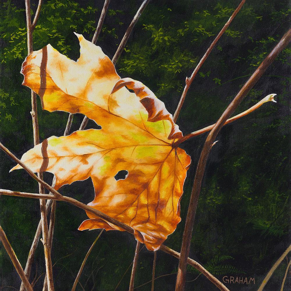 Autumn-in-August-6-WEB.jpg