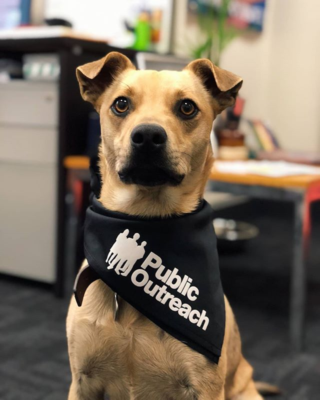 Happy Monday from our resident mascot Brew! Looking sharp in his Public Outreach bandana! 🐕❤
