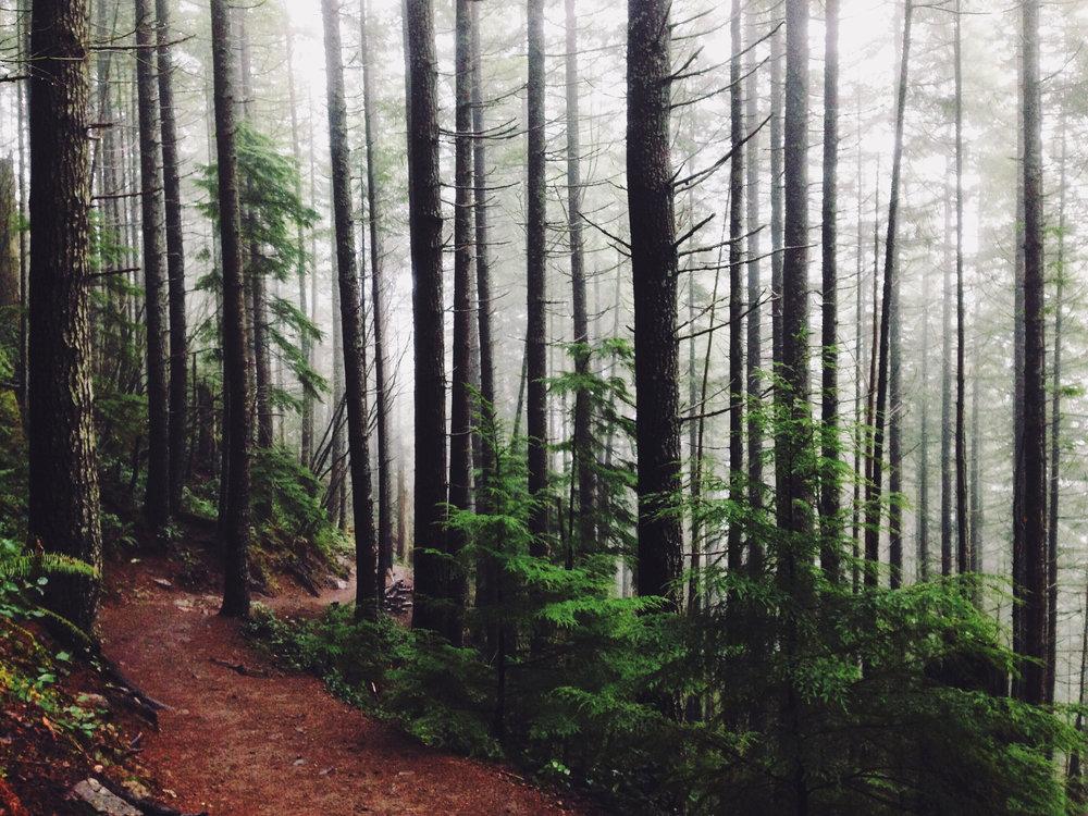 landscape-nature-forest-trees.jpg