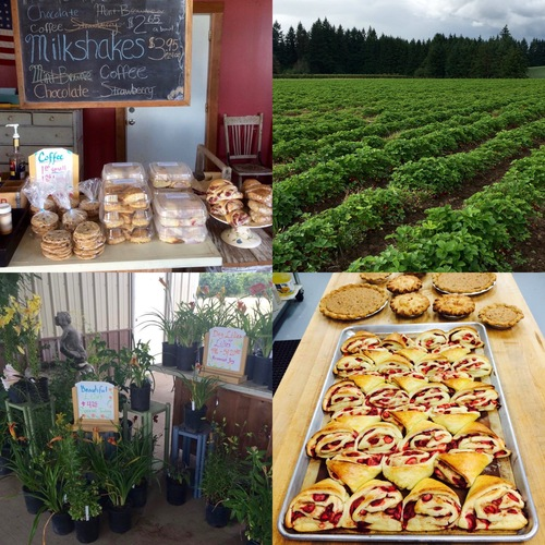 Tour our charming baked goods and garden store!