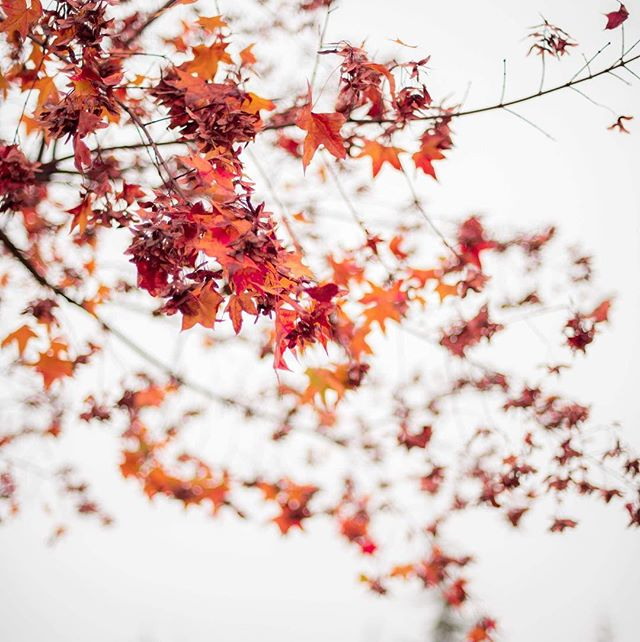 The beauty of autumn 🍂 💛