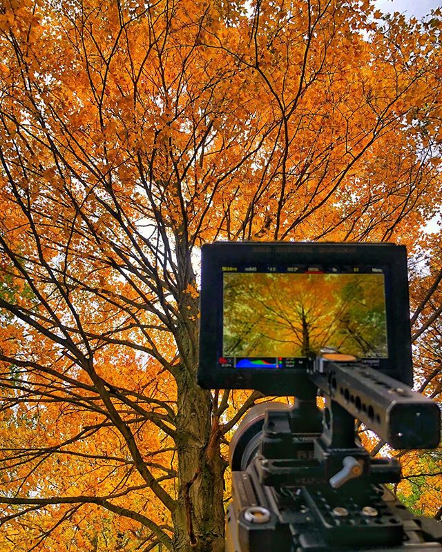 We've now shot in all 4 seasons at Sleeping Bear Dunes for the @nationalparkservice new film. The park's personality changes drastically with each one in ways that are hard to describe but easy to feel. This photo taken in the middle of the forest as thousands of leaves fell around us. Captured moment for film using RED DSMC2 Helium 8K S35. @reddigitalcinema @woodencamera @sleepingbeardune . . . . . #reddigitalcinema #woodencamera #nationalpark #sleepingbeardunes #naturalhistory #naturalhistoryfilmmaking #northernmichigan