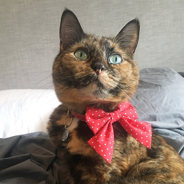 Danika   says:   This is such a cute collar and sailor bow. My cat doesn't seem to mind it at all and it looks so cute. For sure gonna order from this shop again!  Worn:  XXXS Red / White Dots Sailor Bow