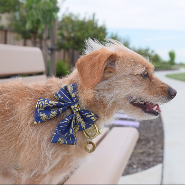 Kelsey   says:   Looove this bow! It's super sturdy, and looks great on my 12 pound girl  Worn:  XS Rifle Paper Co / Navy & Gold Floral Sailor Bow