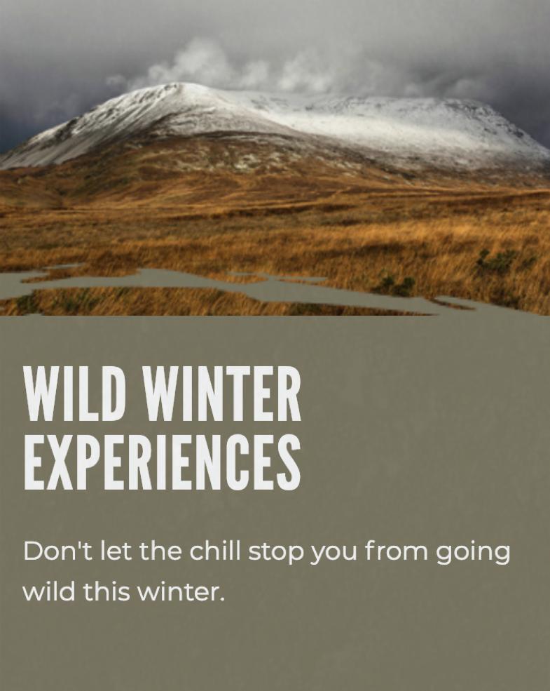 Wild Winter.png