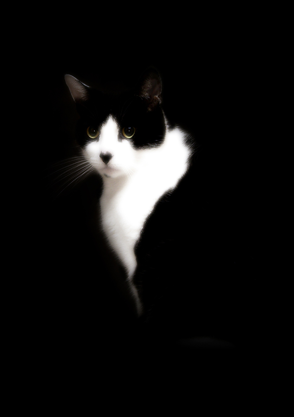 Pets021.jpg