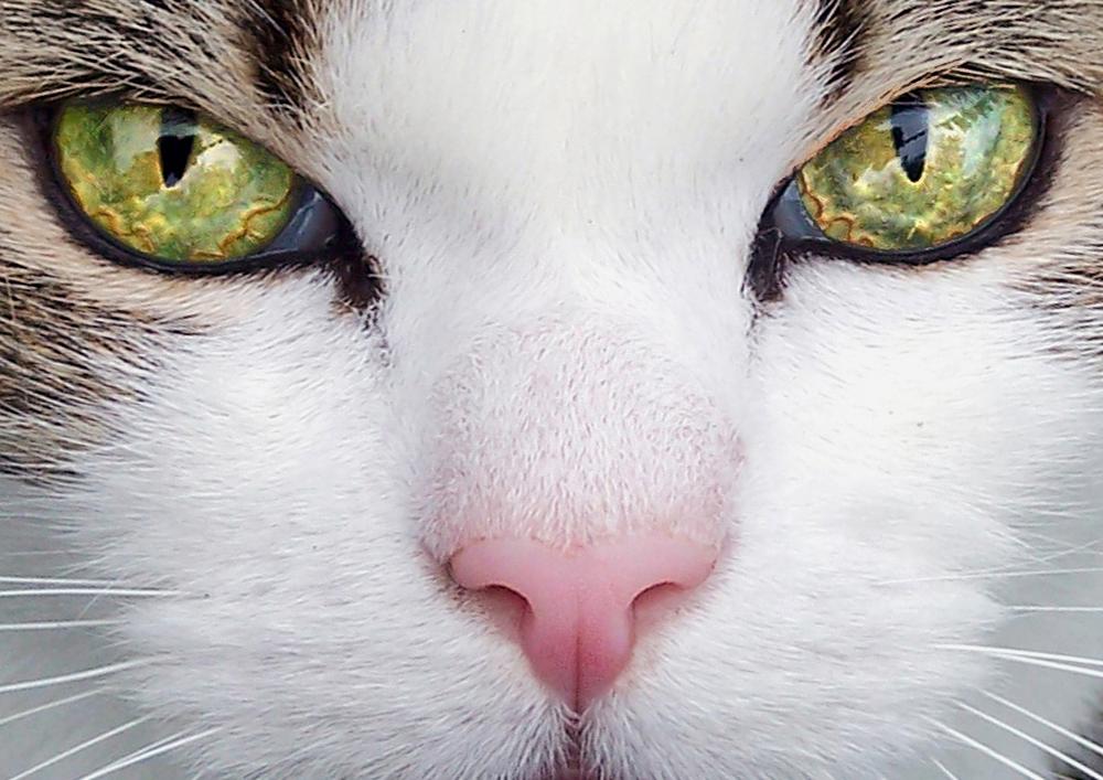 Pets028.jpg