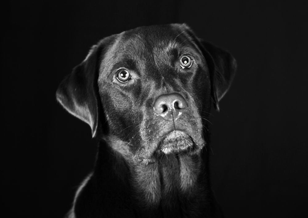 Malvern Pet Photography