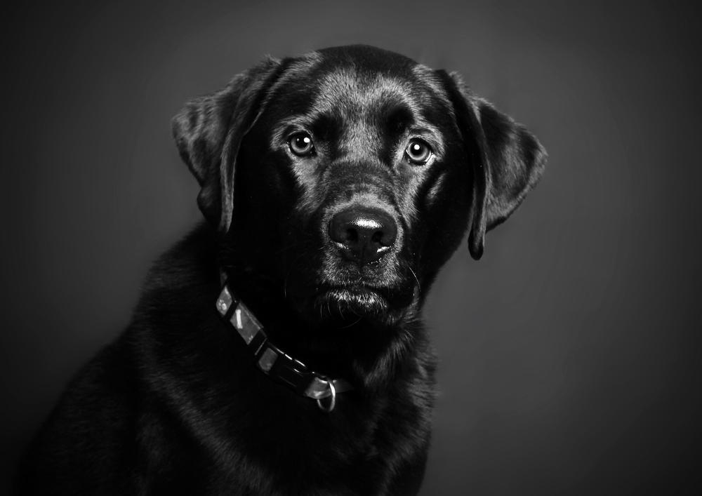 Pets071.jpg