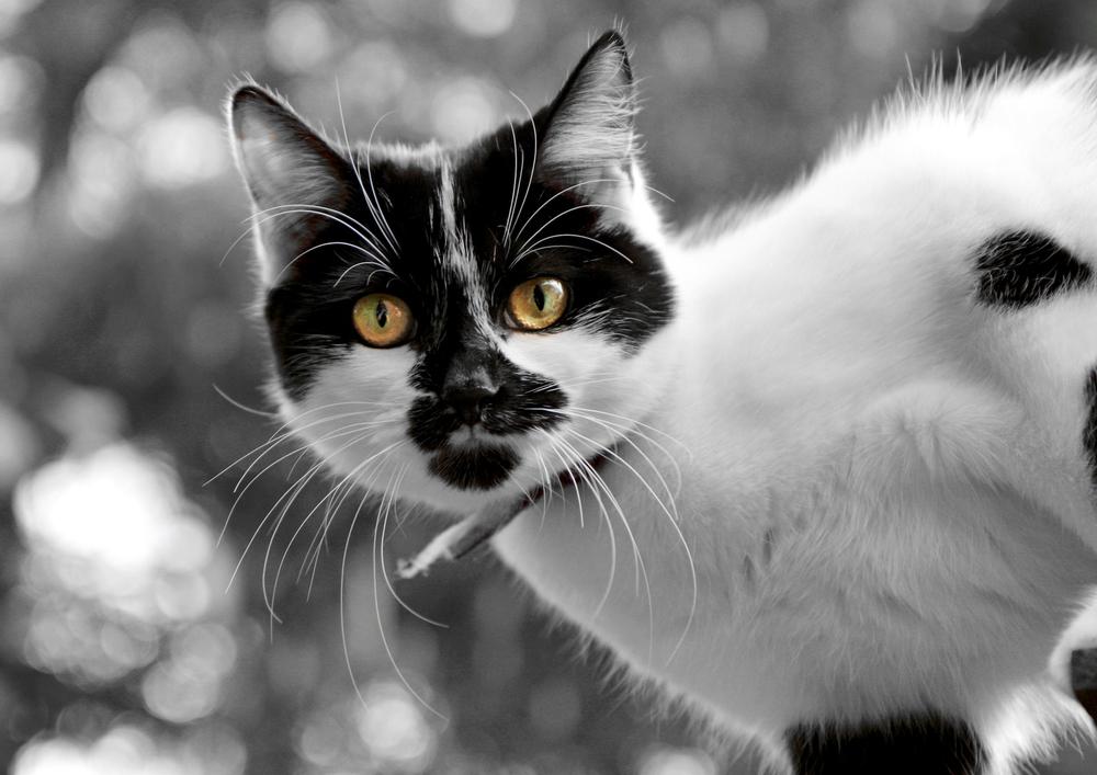 Pets084.jpg
