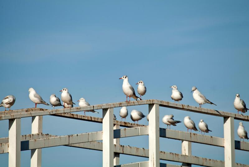 Seagulls, Worcester