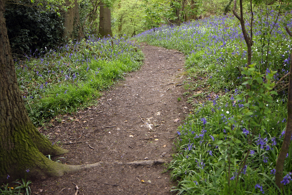 Bluebell Path, West Malvern