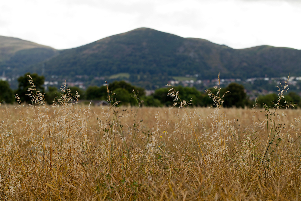 Malvern Hills through the grass at Malvern Link