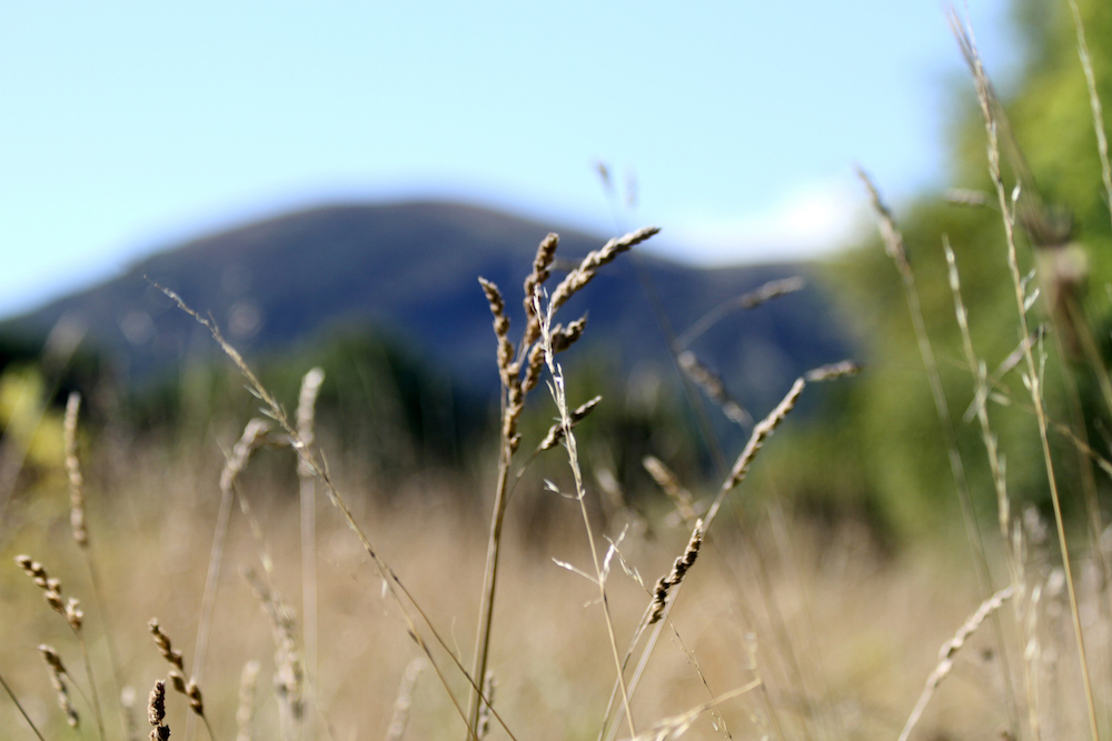 Malvern Hills through the Grass