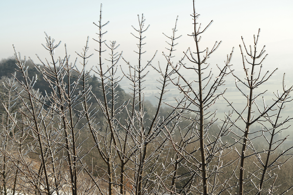 Frozen Grass on the Malvern Hills