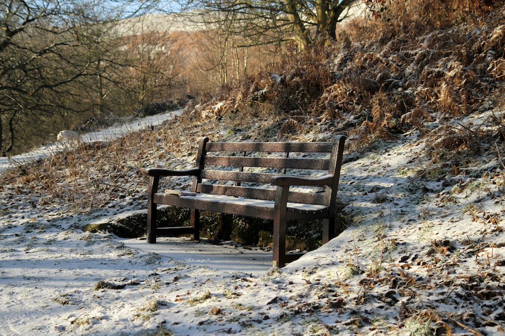 Frozen Bench on path to British Camp