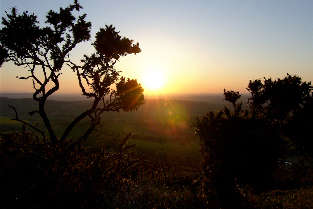 Sunset through the gorse, Malvern Hills