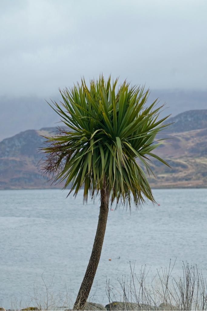 Scotland61.jpg