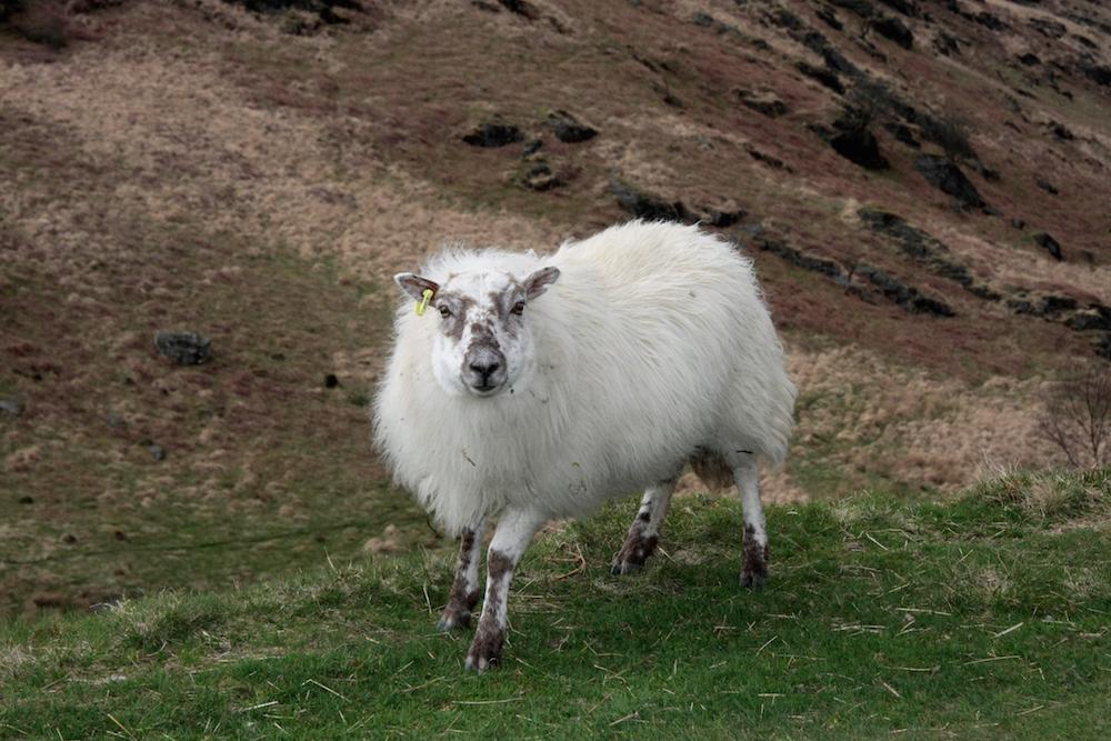 Wales5.JPG