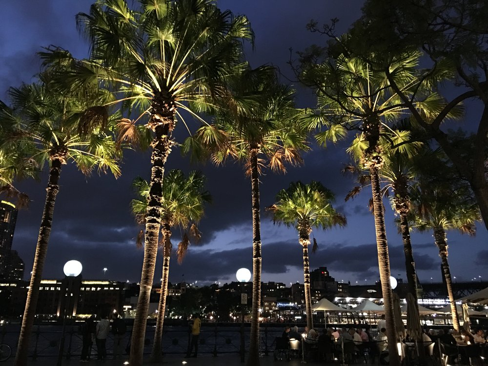 Palm trees near to The Opera House
