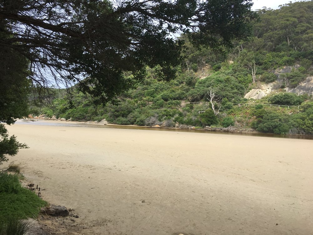 The river beach where the nearby trees are filled with squawking cockatoos and other birds!