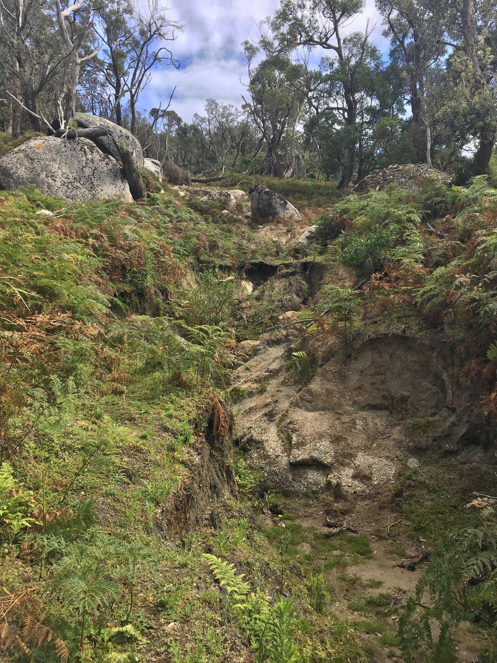 Wombat territory :)