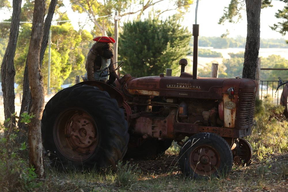 Monkey with a hat on sat on a tractor - why not!