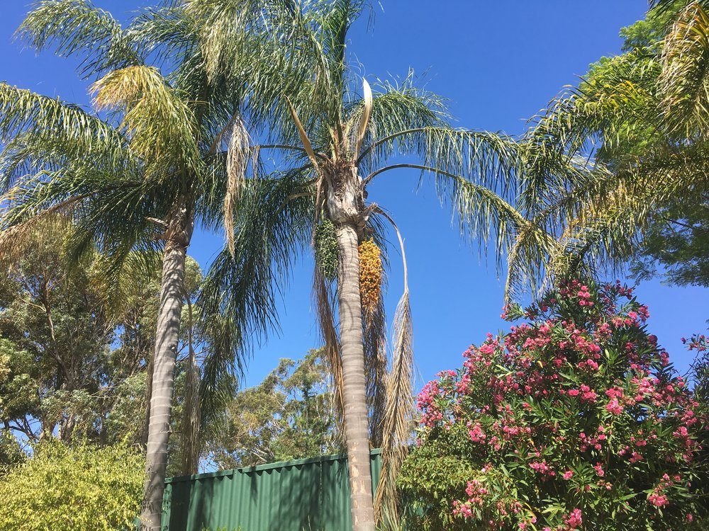View from my lounger in Greenwood, Perth