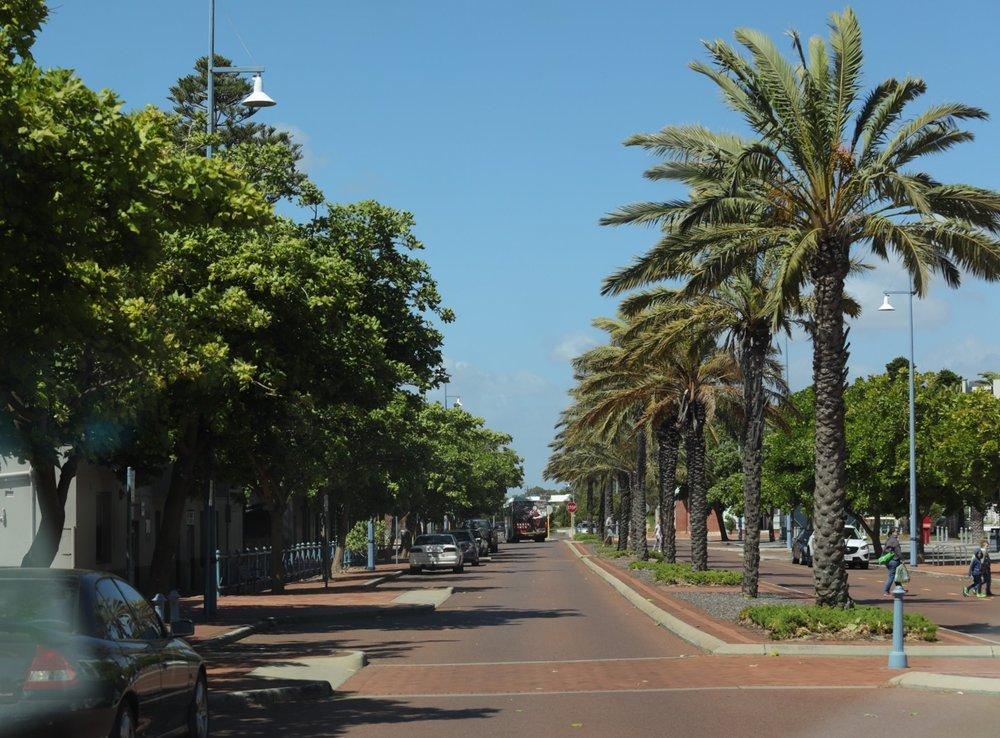 Treelined street, Rockingham