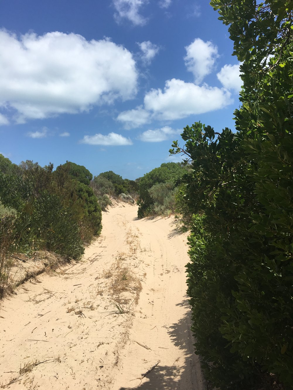 Walk through the dunes at Coorong