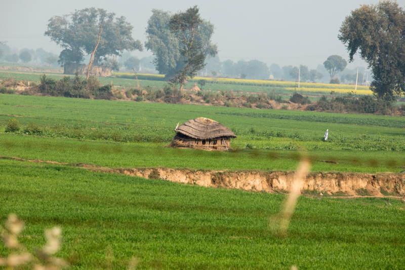 Manure hut, Jattari, India