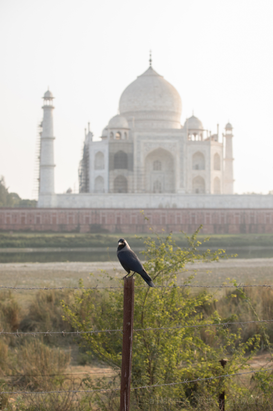 A birds eye view, Agra, Uttar Pradesh, India