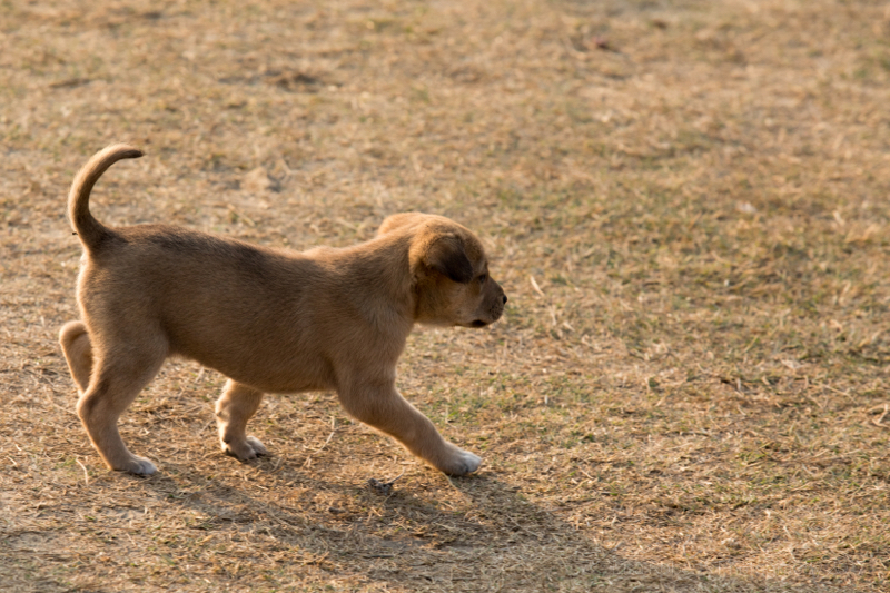 Street puppy, Agra, Uttar Pradesh, India