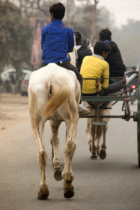 Boy on Skinny Horse, Agra, Uttar Pradesh, India