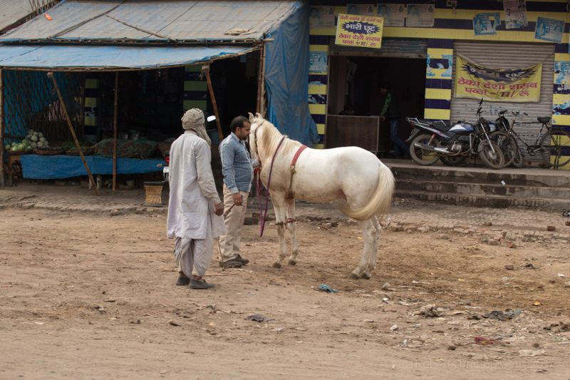 Men with white horse, Chhata, India