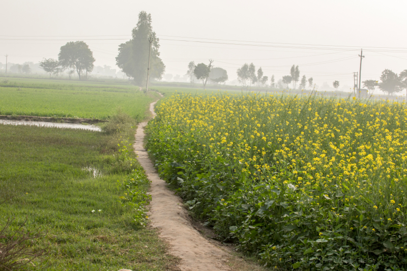 Countryside, Palwal India