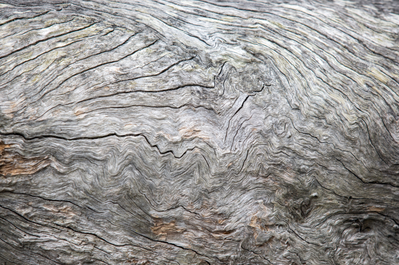 Old bark, NSW, Australia