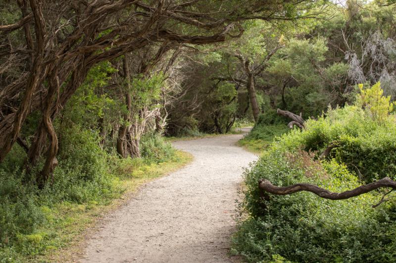 Tidal River path,Wilson's Promontary, Victoria, Australia