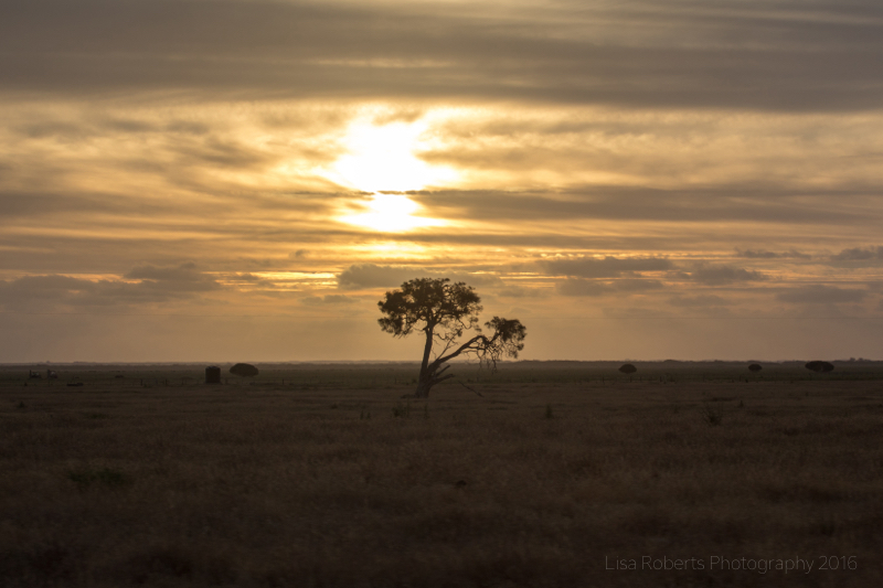 Lonely tree, South Australia
