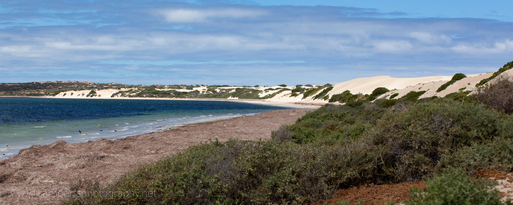 Fowlers Bay, South Australia
