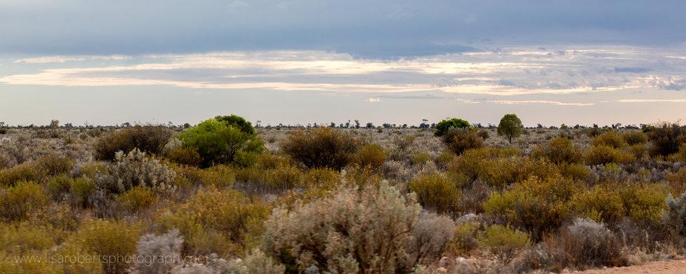 Bush, Western Australia