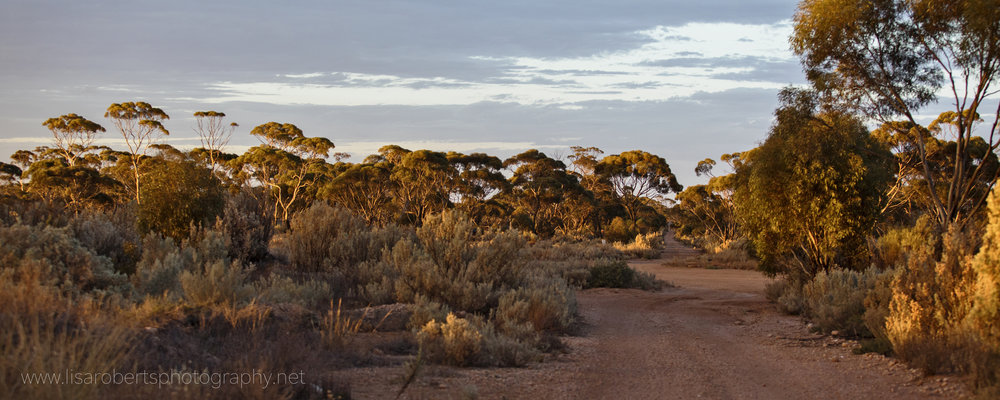 Balladonia Roadhouse, Western Australia