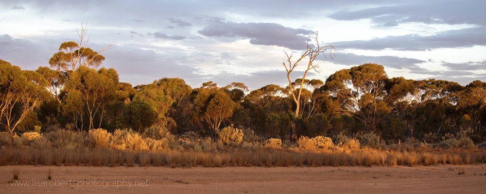 Sunset from the Balladonia roadhouse, Western Australia