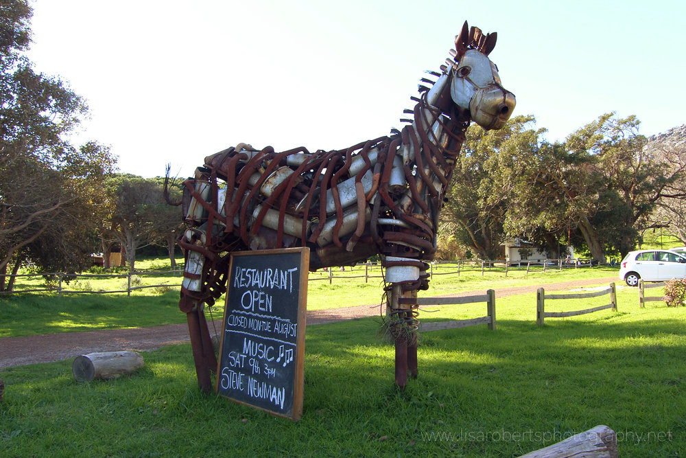 Scrap metalhorse sculpture, Western Cape, South Africa