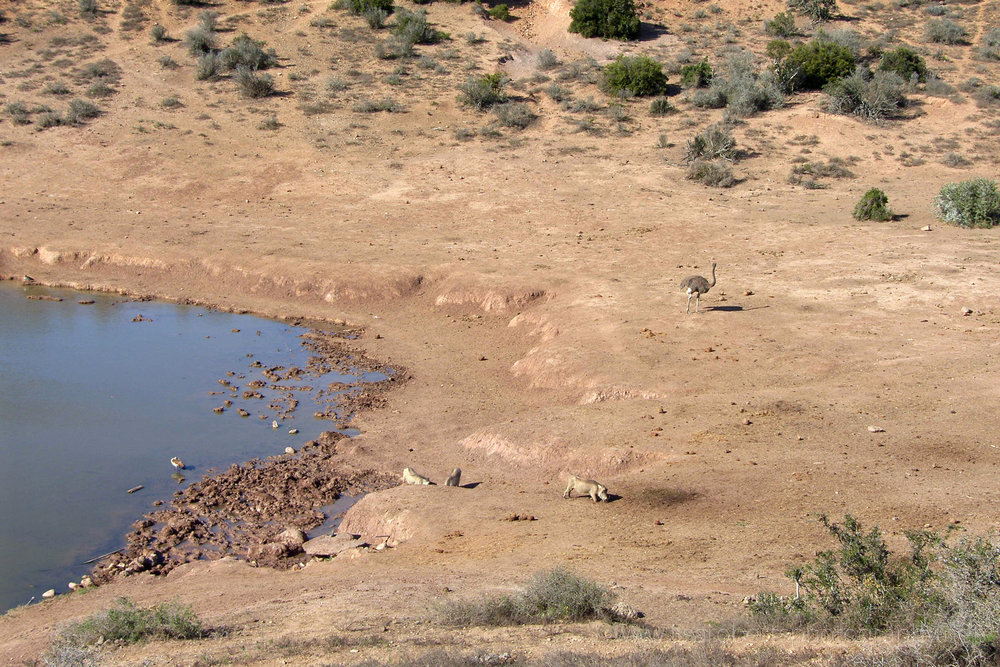Waterhole, Addo Elephant Park, Eastern cape, South Africa