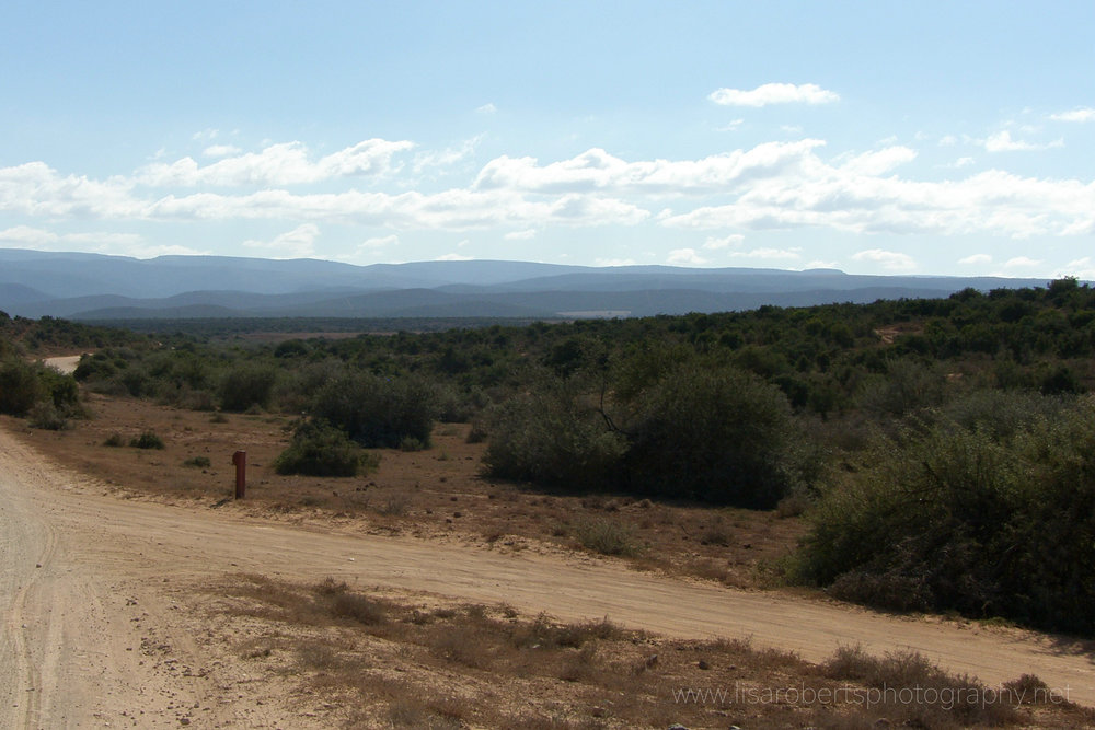 Addo Elephant Park, Eastern Cape, South Africa