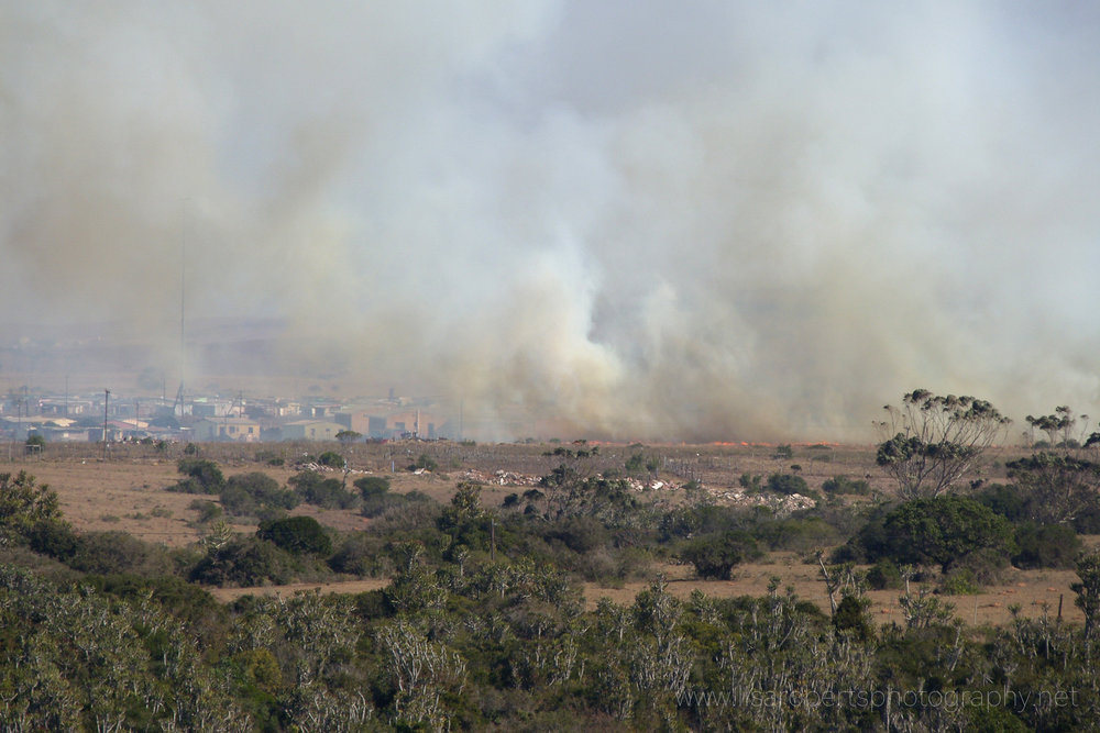 Bush Fire, Eastern Cape, South Africa