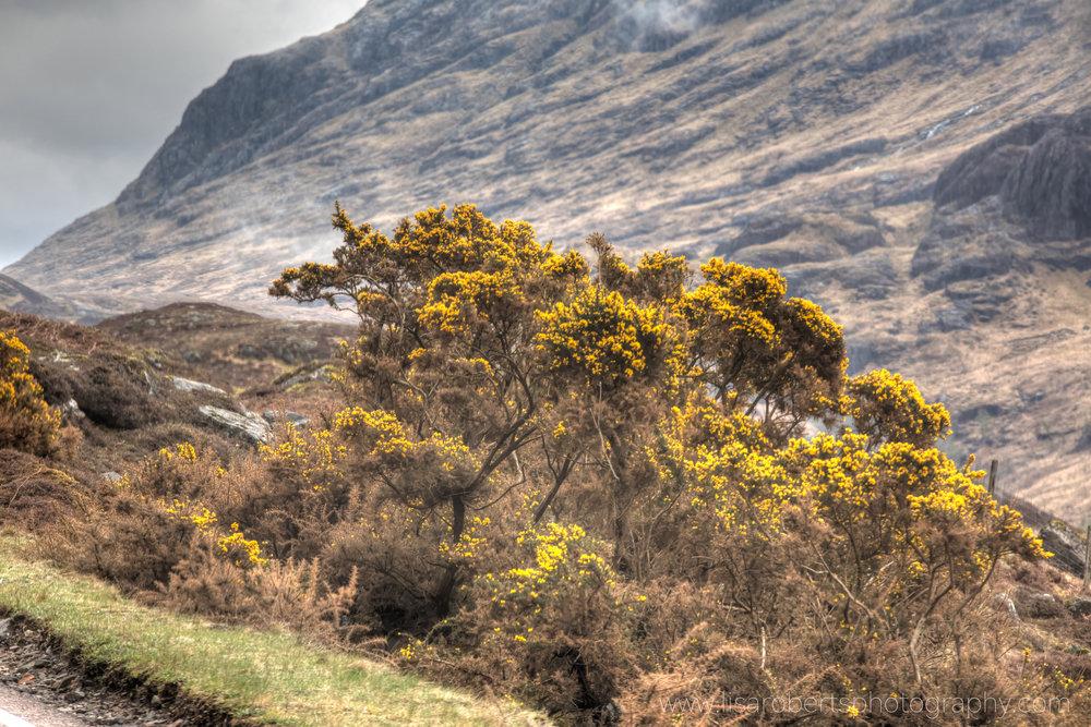 Scotland 1827.jpg