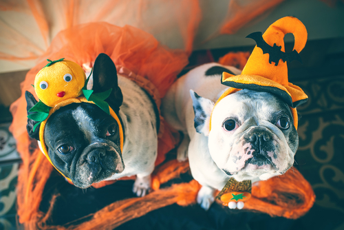 Last-Minute Halloween Costume Ideas - If you're panicking that you haven't picked your Halloween costume yet, here are some of the trendiest last-minute costume ideas.