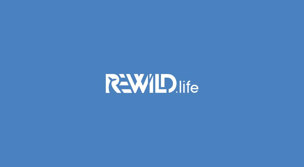 rewild-sea.png